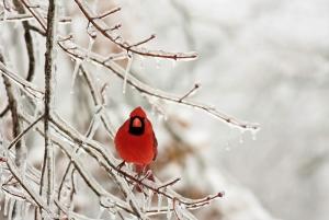 bigstock-Snow-Bird-4424430