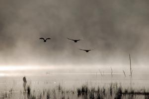 bigstock-Birds-5207436