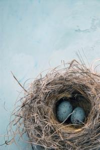 bigstock-Eggs-In-A-Nest-2572954