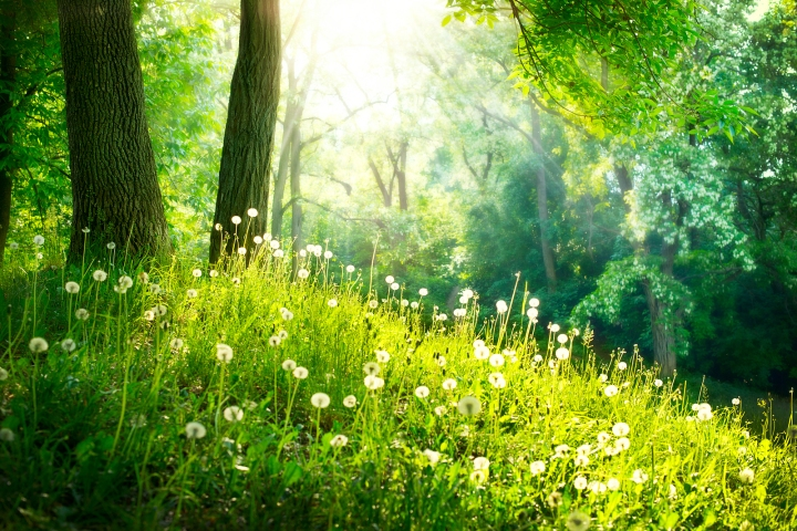 bigstock-Spring-Nature-Beautiful-Lands-45772306